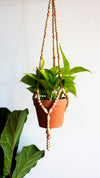 Special Edition Peach Beaded Hanging Planter