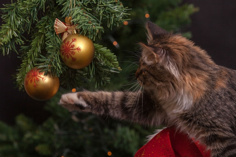 Last Minute Holiday Gift Guide: For Cats