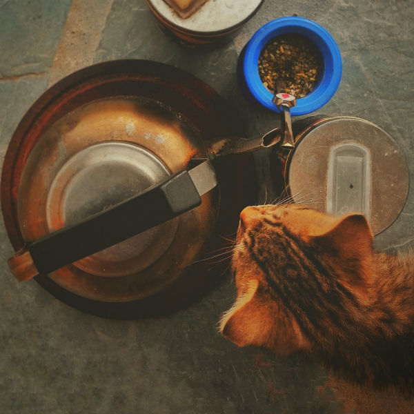 Should I Feed My Cat Wet Food or Dry Food?