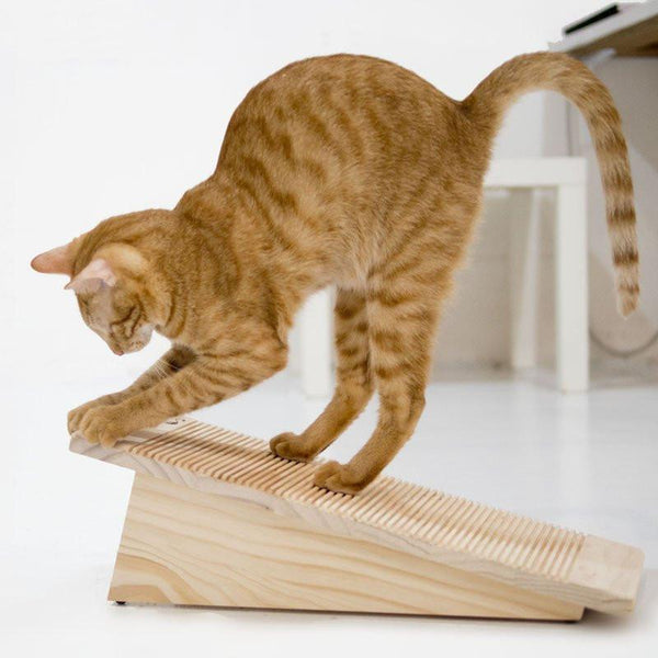 Which Cat Scratcher Is Best For My Kitty?