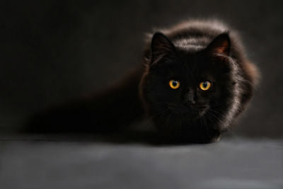 5 Fun Facts About Black Cats