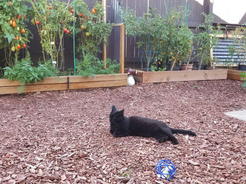 Black Cat Hanging Out In a Garden