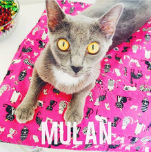 Load image into Gallery viewer, For Mew - Nip Mats Cat Toys