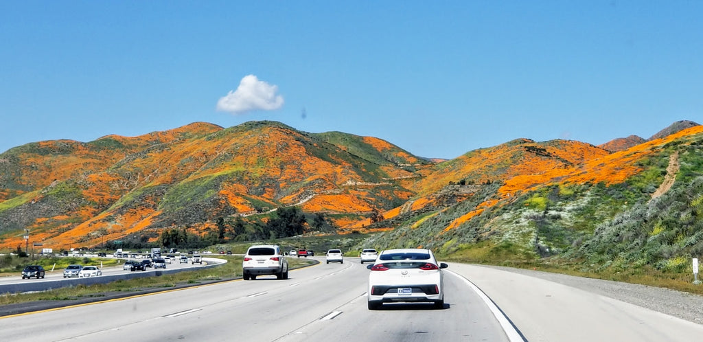 The California Poppy Super Bloom at Walker Canyon, near Lake Elsinore, Southern CA
