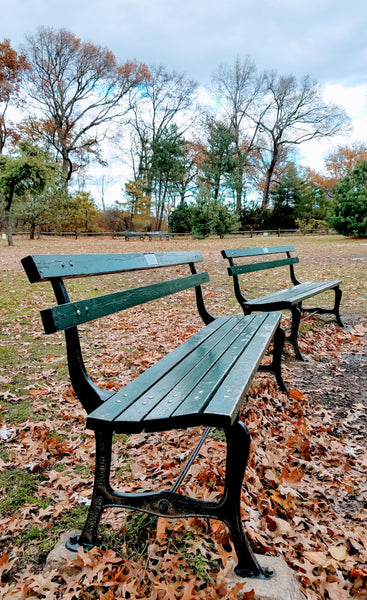 Park bench in Central Park, New York City.