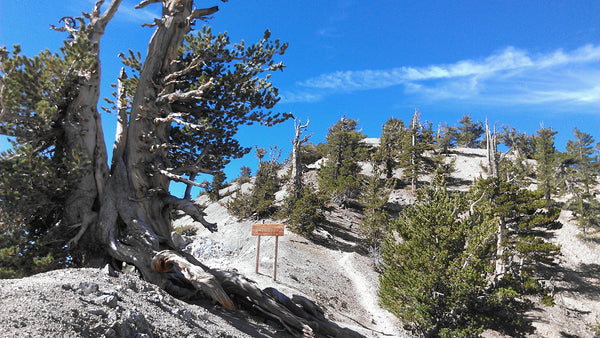 Approaching the summit of Mount Baden-Powell