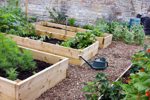 Raised Vegetable Beds: How to Affordably Fill Raised Garden Beds