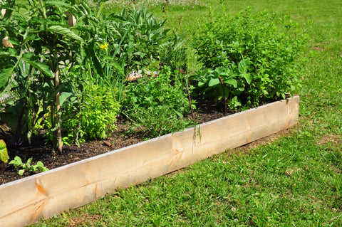 A Raised Garden Bed with Herbs