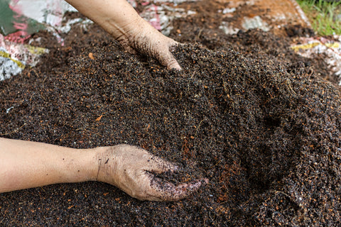 Mixing Rotten Compost with Soil