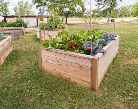Raised Garden Beds with Vegetables