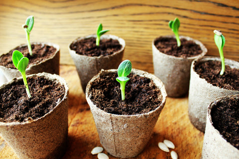 Sprouting Seeds in Pots