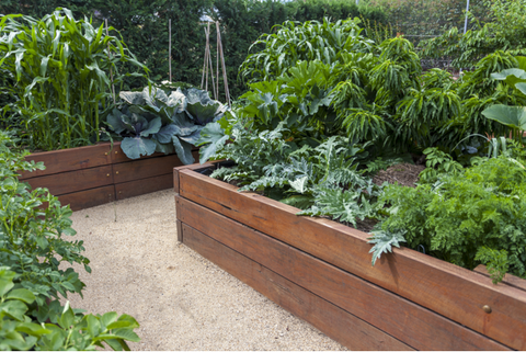 Vegetable Garden Beds