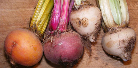 Golden, Red and White Beetroots