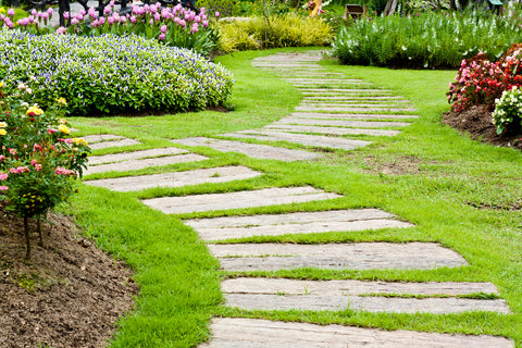 Grass Through Pavers