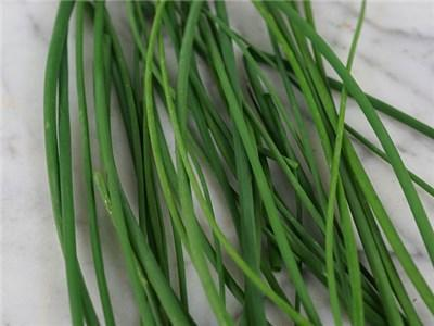 Green Valley Supply Lawn & Patio Chives Common Seeds in 1 Oz Jar