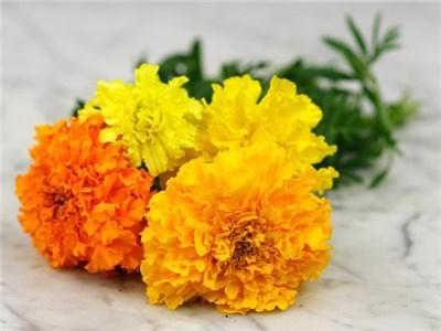 Green Valley Supply Seeds Crackerjack Mix African Marigold (200 seeds)