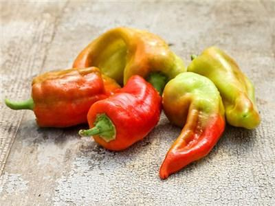 Green Valley Supply Seeds Cubanelle Sweet Pepper (25 seeds)