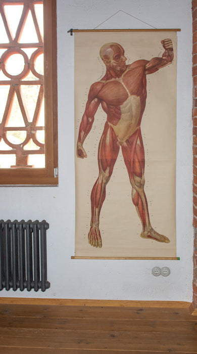 Muscles of the Human Body, Deutsches Hygiene Institute, 1948 - Josef und Josefine