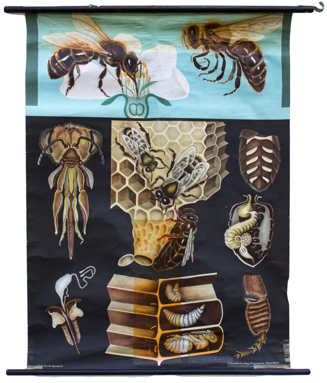 Bee, Jung-Koch-Quentell, 1968