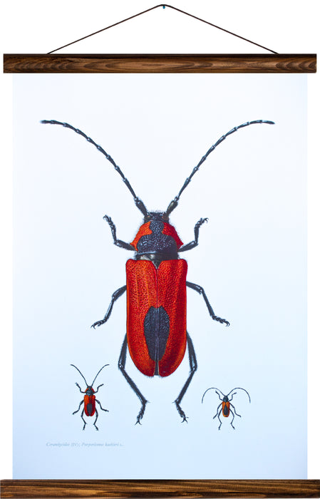 Purpurbock beetle, reprint on linen - Josef und Josefine