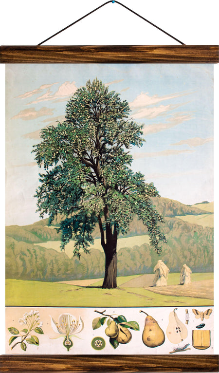 Pear tree, reprint on linen - Josef und Josefine