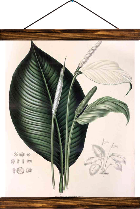 Peace lily, reprint on linen - Josef und Josefine