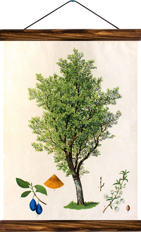 Plum tree, reprint on linen - Josef und Josefine