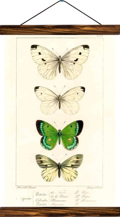 Butterflies, reprint on linen - Josef und Josefine