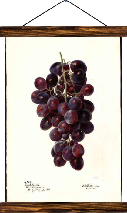 Grapes, reprint on linen