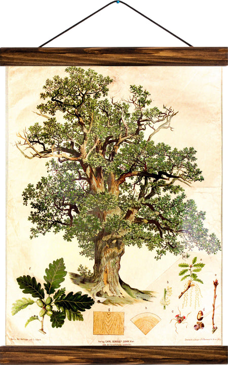 Oak tree, reprint on linen - Josef und Josefine