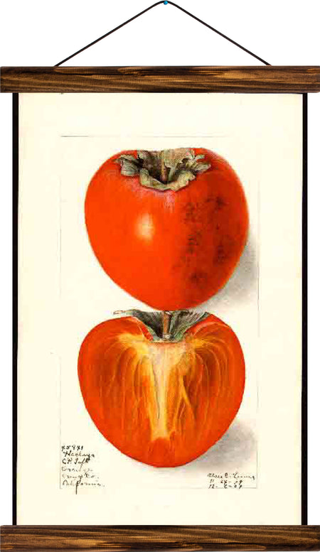 Tomatoe, reprint on linen - Josef und Josefine