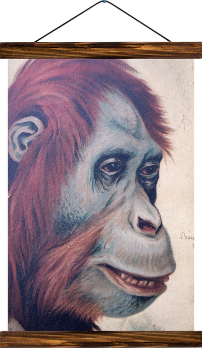 Orangutan, reprint on linen - Josef und Josefine