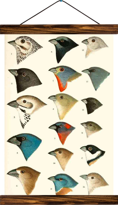 Birds, reprint on linen - Josef und Josefine