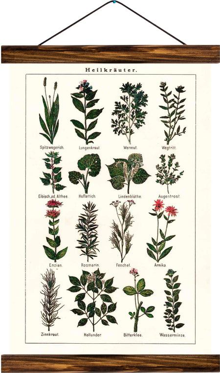 Medicinal herbs, reprint on linen - Josef und Josefine