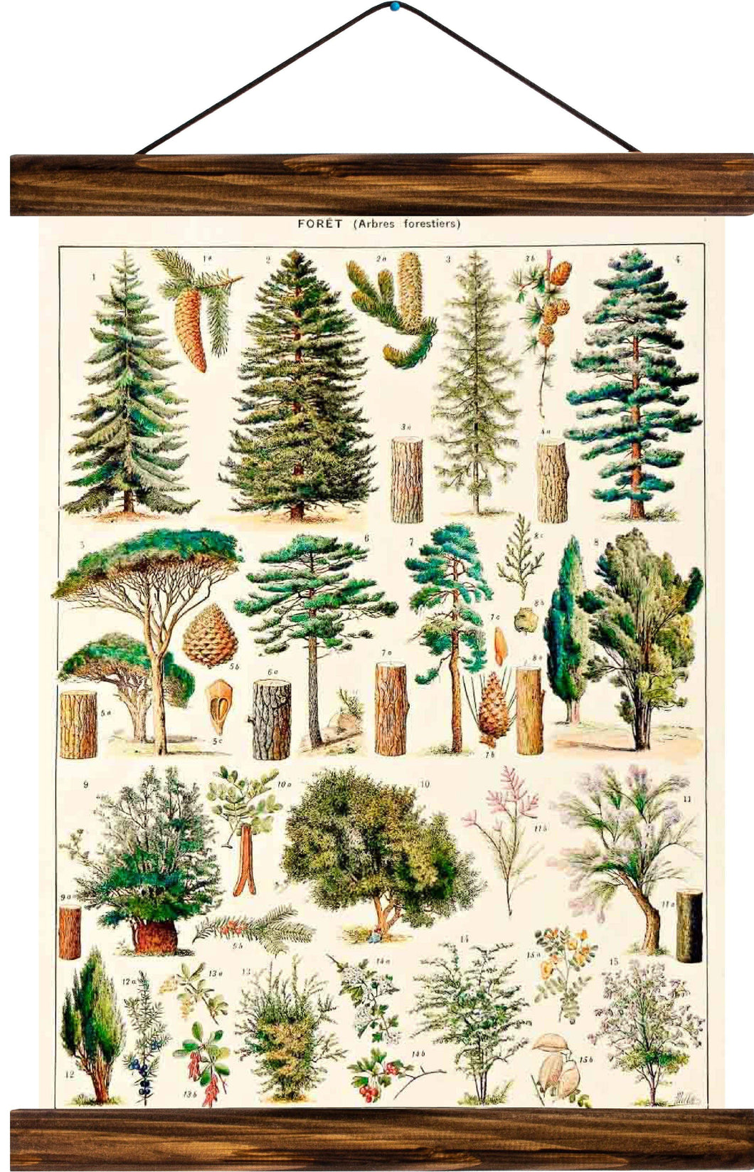 Different types of trees, reprint on linen