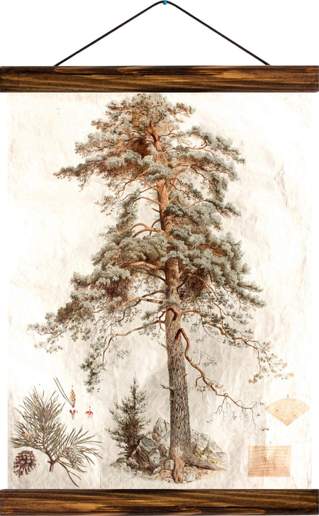 Copy of Scots pine, reprint on linen - Josef und Josefine