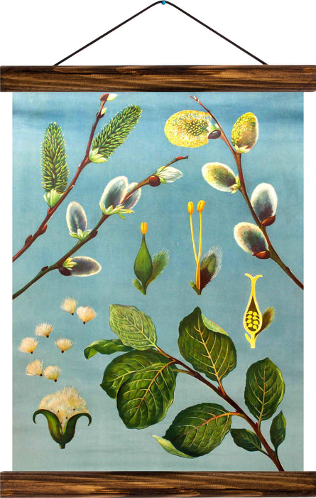 Catkins, reprint on linen - Josef und Josefine