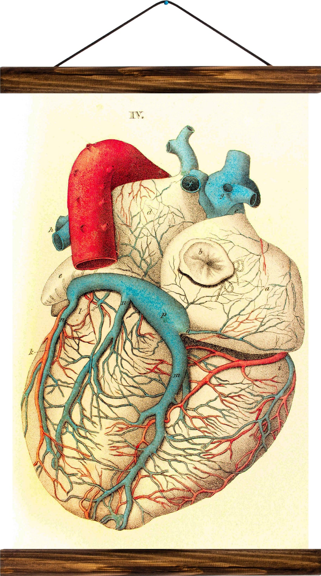Human heart, reprint on linen