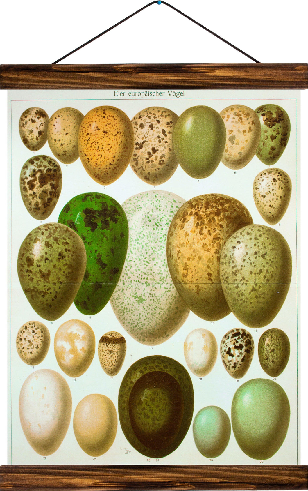 Eggs of european birds, reprint on linen