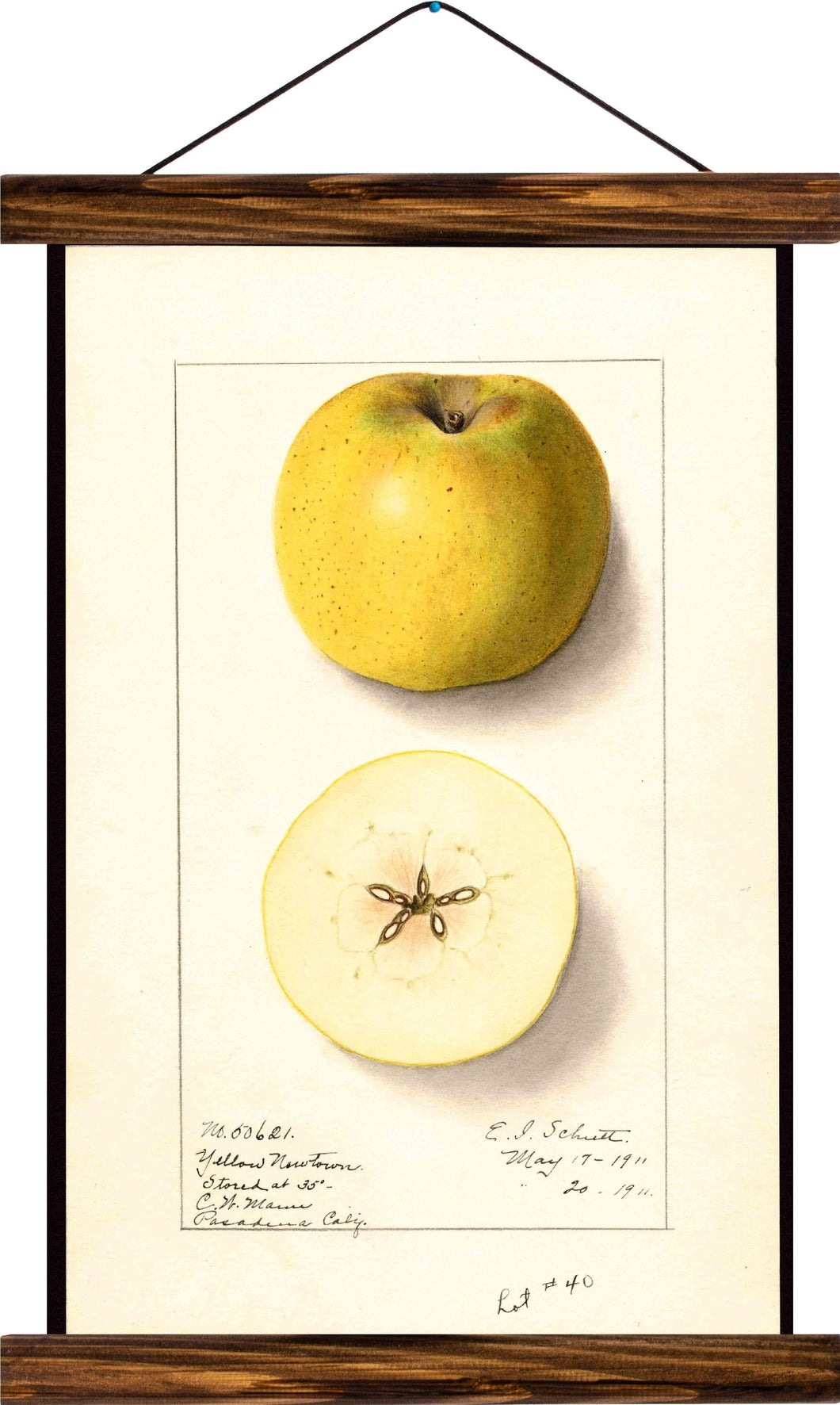 Apple, reprint on linen