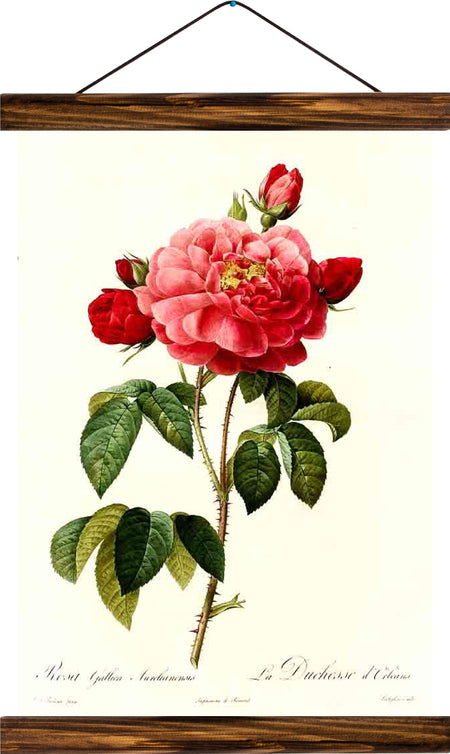 Rose, reprint on linen - Josef und Josefine