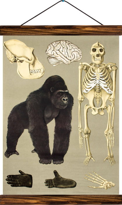 Gorilla, reprint on linen - Josef und Josefine