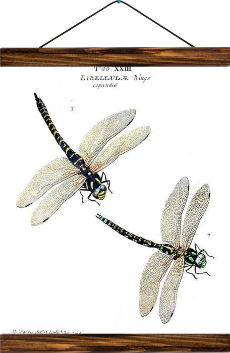 Dragonflies, reprint on linen - Josef und Josefine