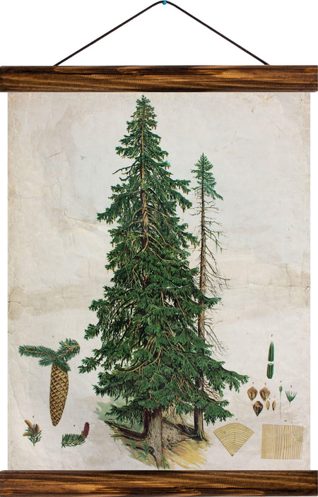 Spurce tree, reprint on linen - Josef und Josefine