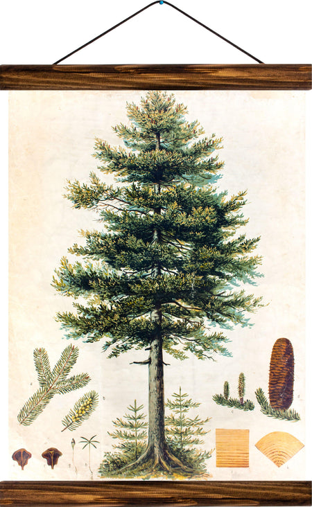 Fir tree, reprint on linen - Josef und Josefine