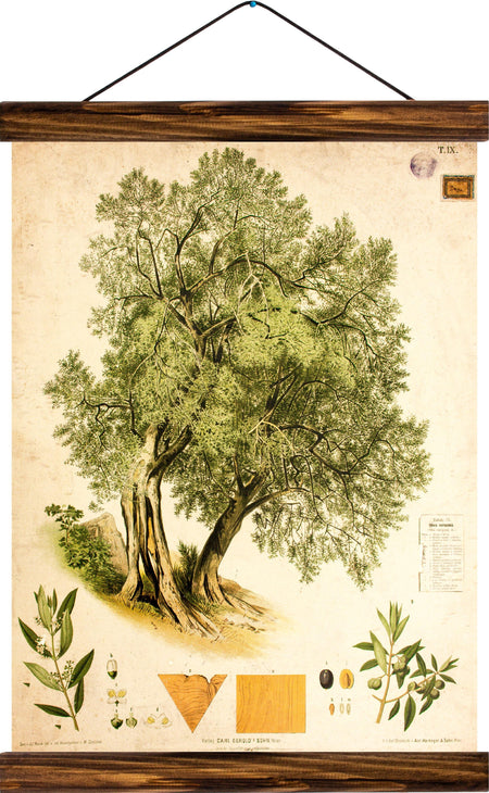 Olive tree, reprint on linen - Josef und Josefine