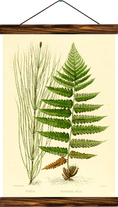 Fern, reprint on linen - Josef und Josefine