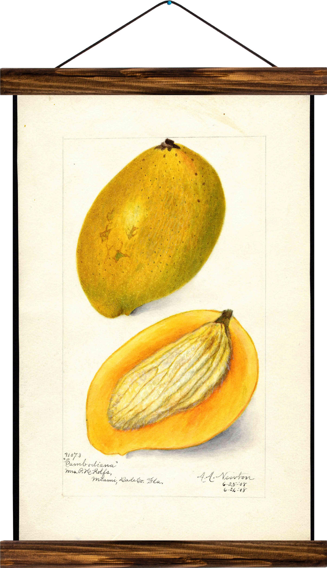 Mango, reprint on linen