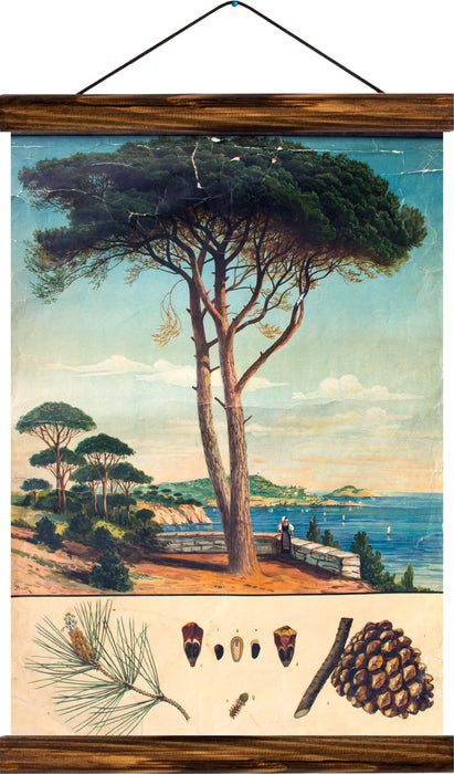 Sea pine, reprint on linen - Josef und Josefine