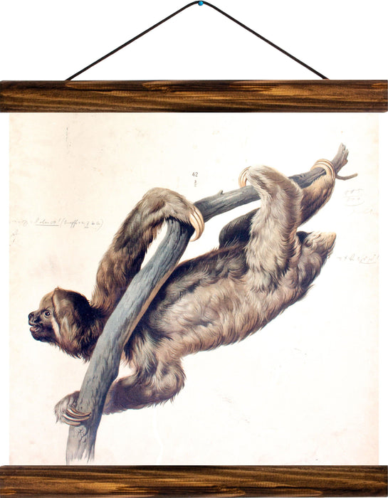 Sloth, reprint on linen - Josef und Josefine